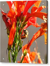 Bees At Work Acrylic Print