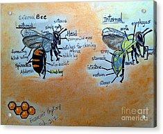 Bees  Acrylic Print by Francine Heykoop