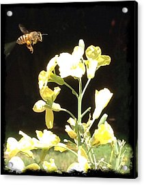 Bees Love Broccoli Acrylic Print