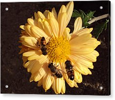Bees On Feast Acrylic Print by David Du Hempsey