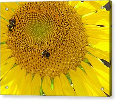 Acrylic Print featuring the photograph Bees Share A Sunflower by Sandi OReilly