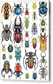 Beetle Collection Acrylic Print
