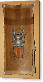 Beetle II Acrylic Print by Gonca Yengin