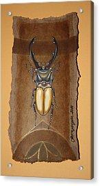 Beetle IIi Acrylic Print by Gonca Yengin