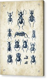 Beetles - 1897 - 01 Acrylic Print by Aged Pixel