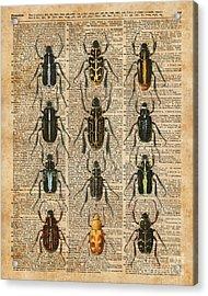 Beetles Bugs Zoology Illustration Vintage Dictionary Art Acrylic Print by Jacob Kuch