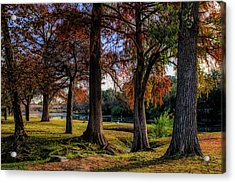 Beginning Of Fall In Texas Acrylic Print