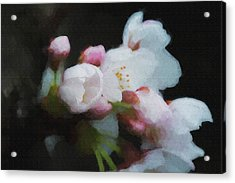 Beginning To Bloom A Good Sign For Spring Acrylic Print by Dan Friend