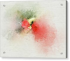 Begonia 3s Acrylic Print