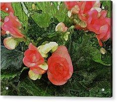 Begonia 5 Acrylic Print