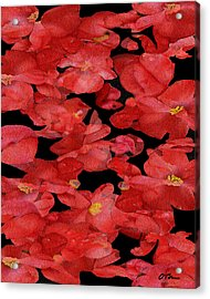 Begonia Discussions Acrylic Print by Claudia O'Brien