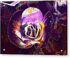 Begonia Flower Pink Wax Like  Acrylic Print