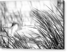 Behind The Grass Acrylic Print