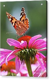 Acrylic Print featuring the photograph Behind The Painted Lady by Lila Fisher-Wenzel
