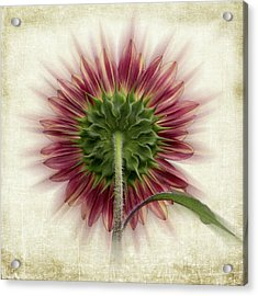 Acrylic Print featuring the photograph Behind The Sunflower by Patti Deters
