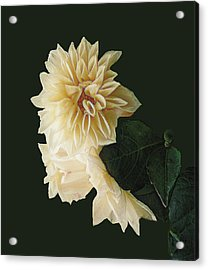 Beige Bold And Beautiful Acrylic Print by RC DeWinter