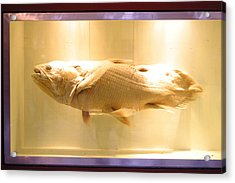 Beige Fish Acrylic Print by Jez C Self