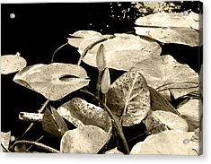Acrylic Print featuring the photograph Beige by Milena Ilieva