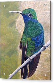 Beija Flor And Nest Acrylic Print by Jeffrey Oldham