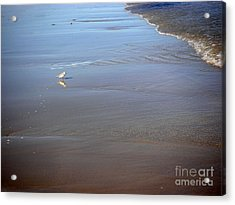 Being One With The Gulf - Cautious Acrylic Print by Lucyna A M Green