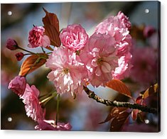 Being Pink - Acrylic Print