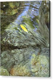 Acrylic Print featuring the photograph Being Still by Marie Neder