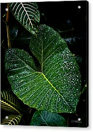 Bejeweled Leaf Acrylic Print by Christopher Holmes