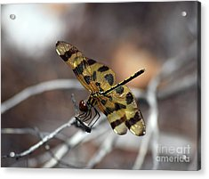 Bejeweled Wings Acrylic Print