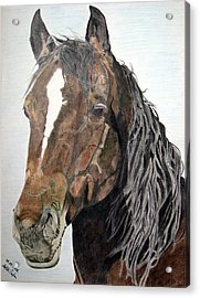Acrylic Print featuring the drawing Bela by Melita Safran