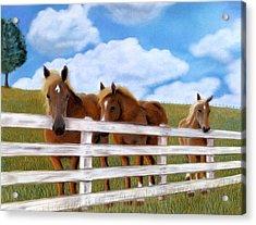 Belgians At Pasture Acrylic Print by Jan Amiss
