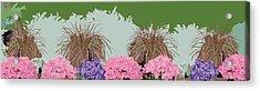 Belknap Mill Flowers Acrylic Print by Marian Federspiel