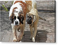 Bell And Maya Acrylic Print by Susie Fisher