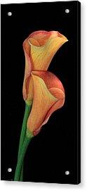Bella Fiore Acrylic Print