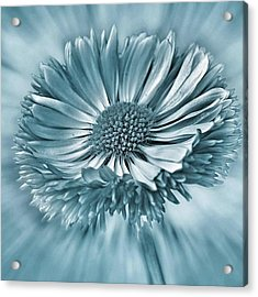 Bellis In Cyan  #flower #flowers Acrylic Print