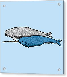 Beluge And Narwhal Whale - Color Acrylic Print by Karl Addison