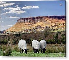 Benbulben, Co. Sligo - Sheep Grazing At The Base Of The Mountain On A Sunny Spring Day Acrylic Print