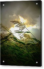 Bend In The Storm Acrylic Print by Ken Gimmi