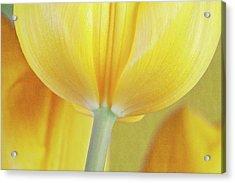 Beneath The Yellow Tulip Acrylic Print