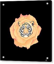 Bengal Blossom Acrylic Print