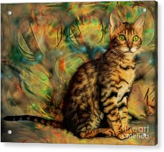 Bengal Kitten Acrylic Print by John Robert Beck