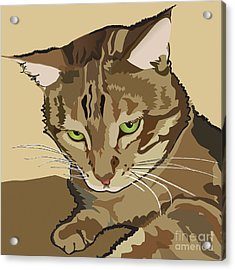 Bengal Kitty Pet Portrait Acrylic Print