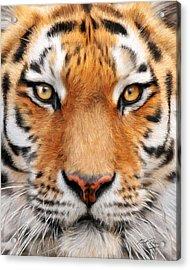 Bengal Tiger Acrylic Print by Bill Fleming