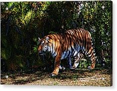 Bengal Tiger - Rdw001072 Acrylic Print