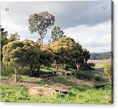 Benicia State Park Iv Acrylic Print by D Kadah Tanaka