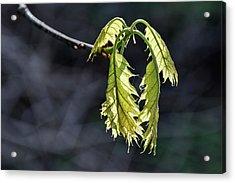 Bent On Growing - Acrylic Print