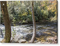 Bent Tree River Acrylic Print by Ricky Dean