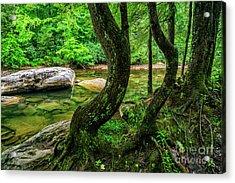 Bent Trees Cranberry River Acrylic Print by Thomas R Fletcher
