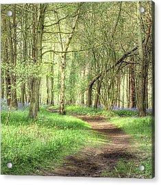 Bentley Woods, Warwickshire #landscape Acrylic Print
