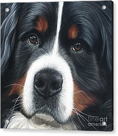 Acrylic Print featuring the painting Up Close by Donna Mulley