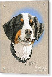 Bernese Mountain Dog Acrylic Print by Marshall Robinson